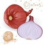 onions-vector_My5euxvd